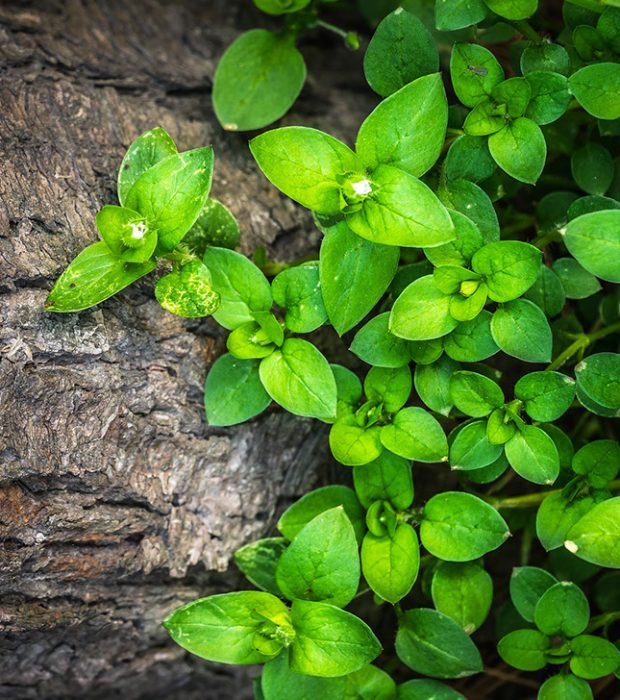 plants-1270892